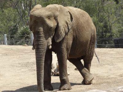羅克漢普頓動物園