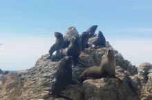 新西兰自驾游第十九天:凯库拉