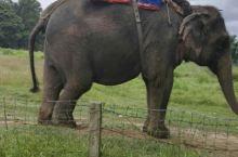 四国游第五十天:尼泊尔奇特旺野生动物园