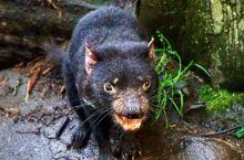 窗外的故事-Tasmania!2-小动物园看动物记