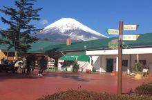 观赏富士山欣赏美景动物