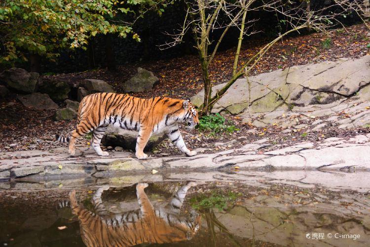 Zurich Zoo3
