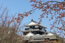 松山城上看樱花