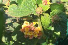 #赏花节#加利利湖的冬季
