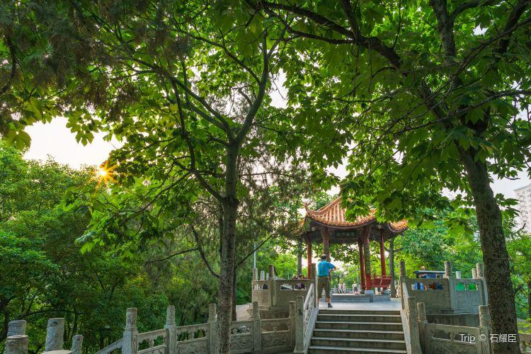 紫荊山公園4