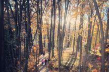秋日暖阳赏枫之旅 dandas hiking