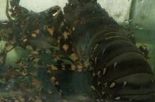 帕赛海鲜市场的龙虾和大皮皮虾