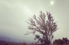 极目金黄千里秀,自成一景阅沧桑。天荒弱木