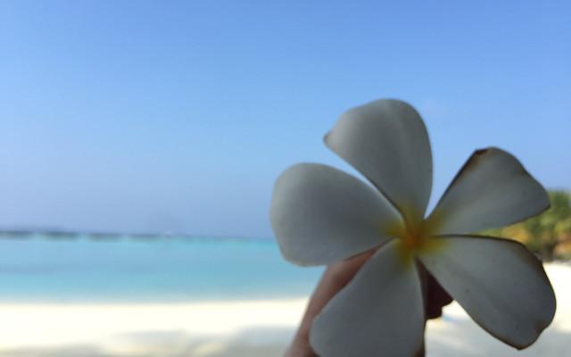 """""""穷游""""马尔代夫满月岛"""