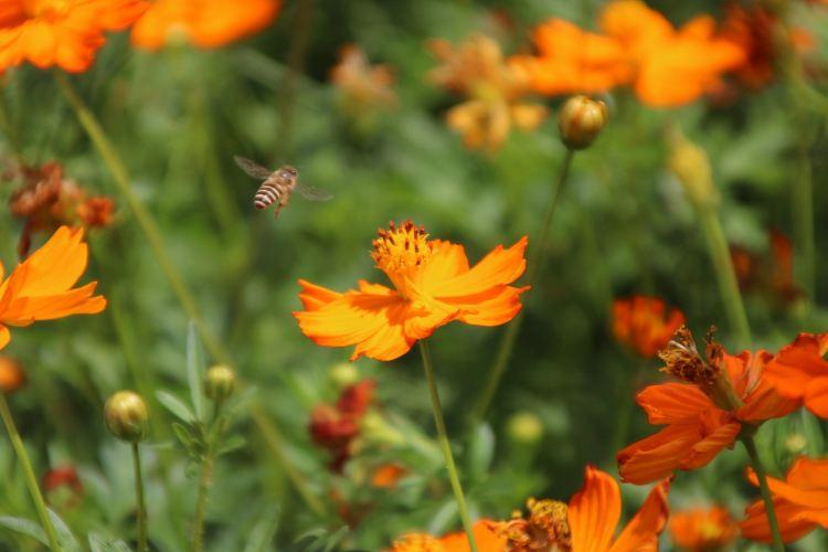 Yuntai Garden4