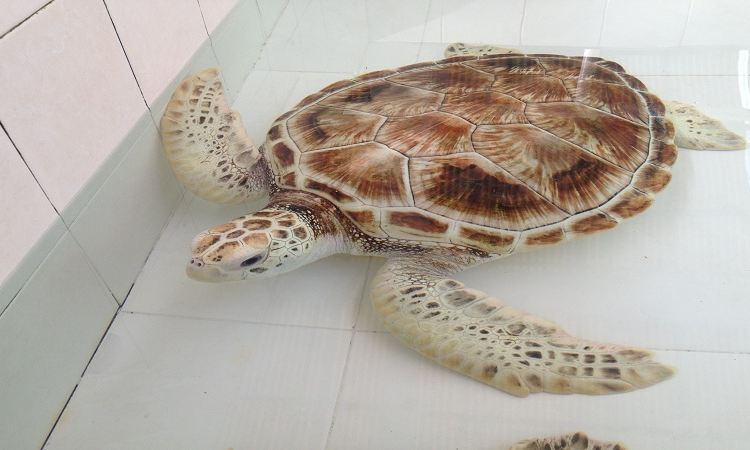 Turtle National Reserve Areas4