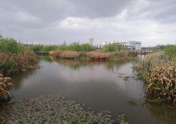 平地森林公园