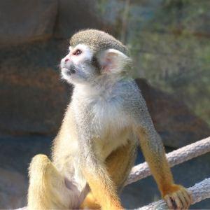 泉州海丝野生动物世界旅游景点攻略图