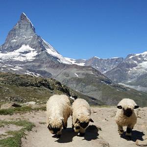 马特洪峰游记图文-马特洪峰徒步旅游---瑞士3周自由行(29))