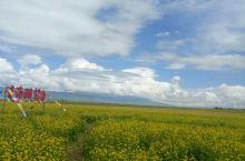 青海湖景色