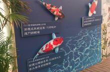 台湾游-锦鲤