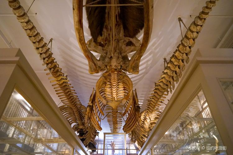 Museum of Comparative Zoology3