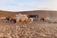 """""""骑着骆驼也能征服摩天大楼"""""""