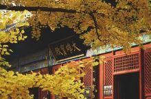银杏来袭,寻觅北京美丽的银杏美景地