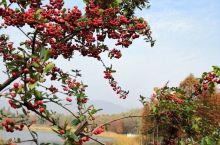 秋意正浓的钟山风景区