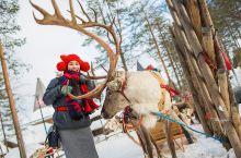 圣诞老人村驯鹿体验