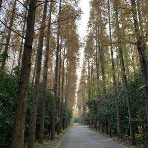 东平国家森林公园旅游景点攻略图