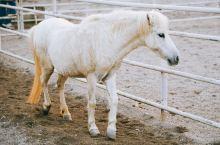 在广西德保,有一种矮萌矮萌的小动物