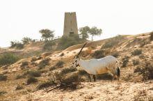 这个酒店的羚羊多到爆,简直一个野生动物园#神奇的酒店