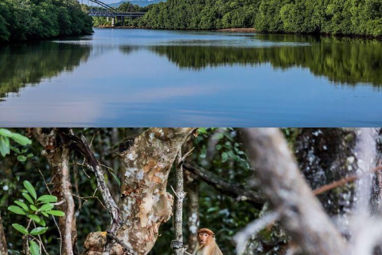 Kawa紅樹林4