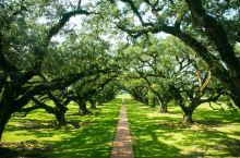 #向往的生活  重回美国种植园时代的庄园生活