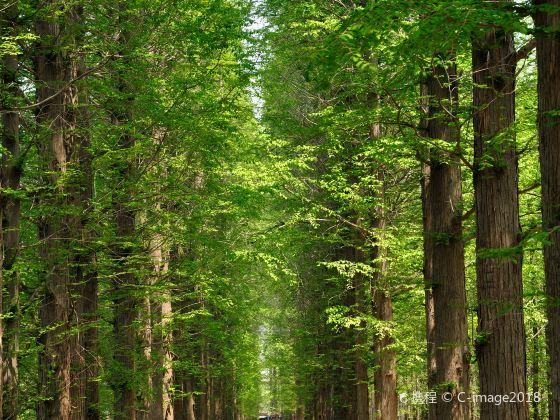 일조해변 국립산림공원