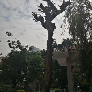 华南农业大学树木园旅游景点攻略图