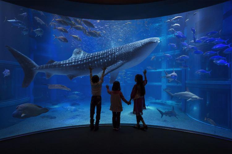 Osaka Aquarium Kaiyukan1