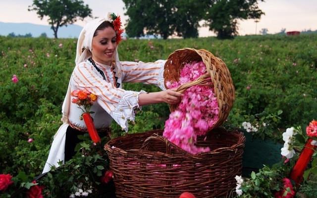"""极有可能加入申根国,5月变身玫瑰花海的""""粉色王国""""——保加利亚"""