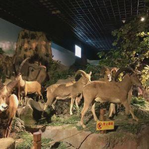 青岛滨海学院世界动物自然生态博物馆旅游景点攻略图