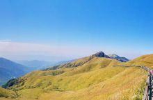 秋天的武功山,漫山遍野的高山芦苇花海