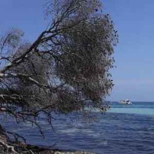 莱兰群岛旅游景点攻略图