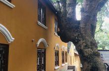 普陀山第二人气的寺院,喜欢古树古刹的味道,奈何人多……