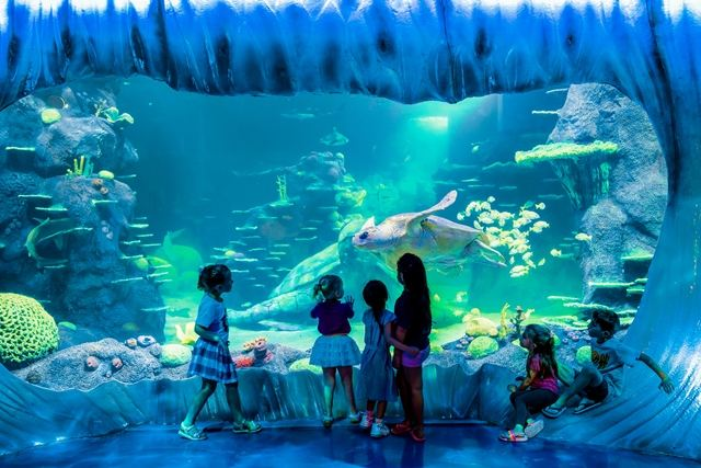 悉尼水族館4