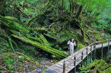 被《指环王》法贡森林治愈 每天泡返老还童汤 闺蜜日本九州6日治愈之旅