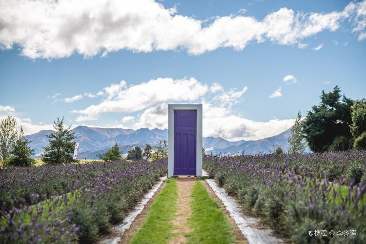 Wanaka Lavender Farm1