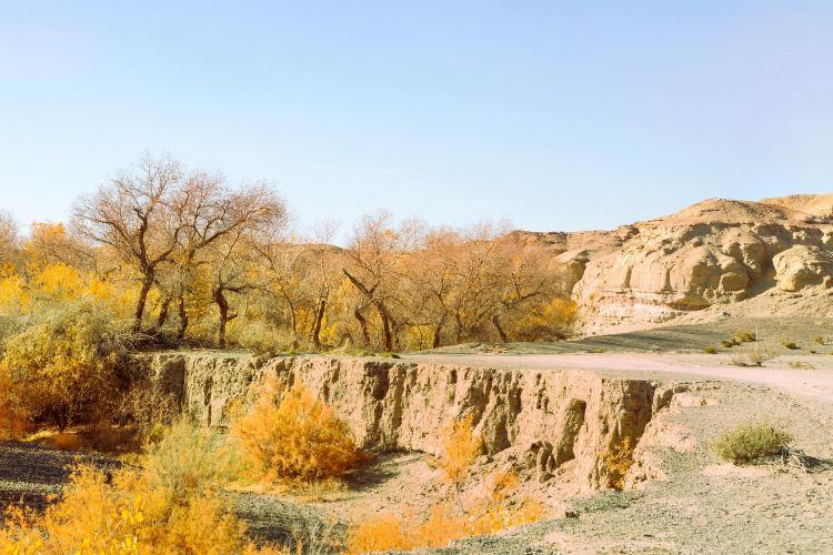 白楊河大峽谷