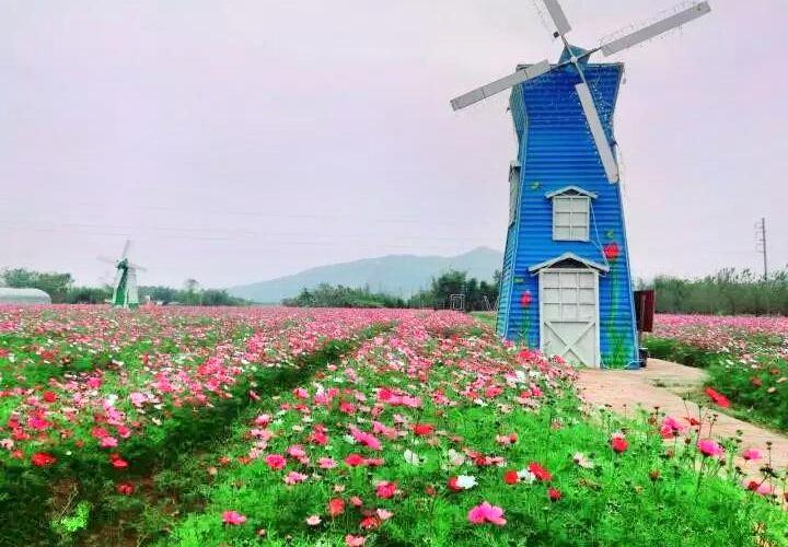 Chabi Flower Sea