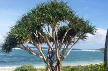 汤加游第十天:ha'apai岛