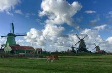 🇳🇱脑🀄️心🀄️眼🀄️的诗篇-荷兰风车村