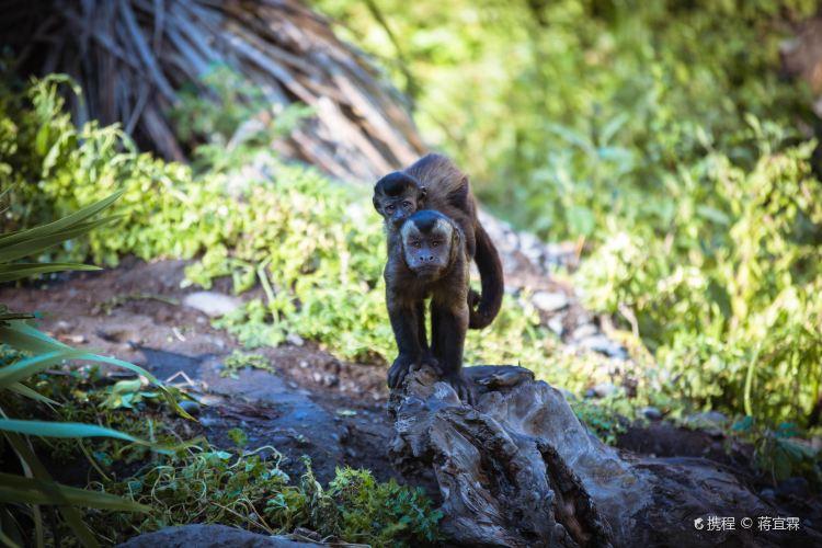 Willowbank Wildlife Reserve4