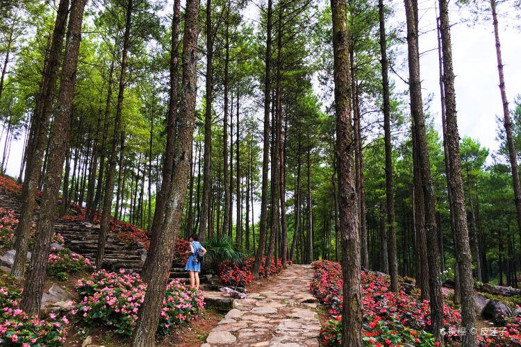 大木林下花園4