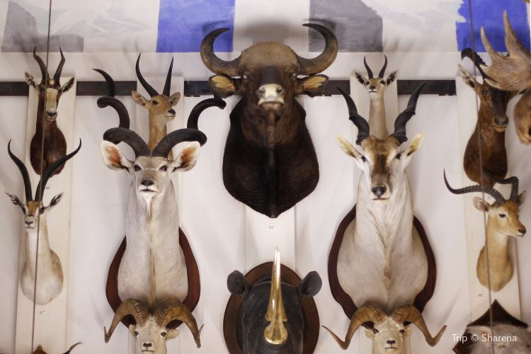 Musée de la chasse et de la nature3