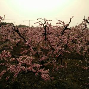 浙北桃花岛旅游景点攻略图