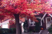怀念多伦多的色彩